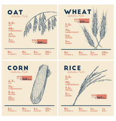 Health benefits cereals rice wheat oat and vector