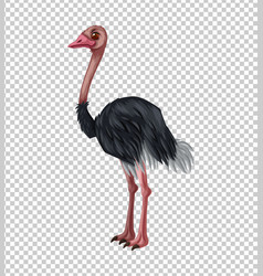 ostrich on transparent background vector image