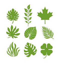 Silhouettes tropical leaves template vector