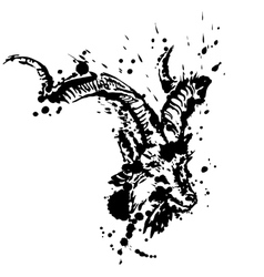 Grunge of goat vector image vector image