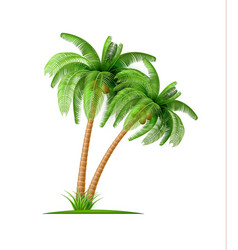 realistic palm tree with coconuts 3d exotic vector image