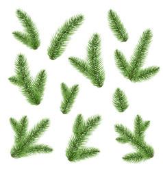 Green fir-tree branch vector
