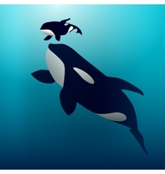 Orca whale vector image