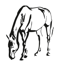 Horse painting vector image vector image