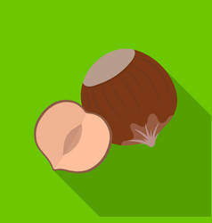 hazelnuts in shelldifferent kinds of nuts single vector image
