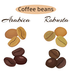 types of coffee beans arabica and robusta vector image