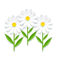3d chamomile isolated on white background vector