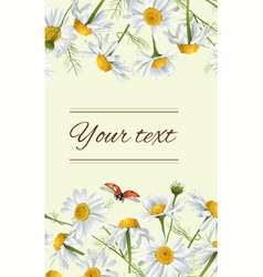 Chamomile flowers banner vector image