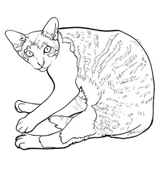 Laying down cat vector image