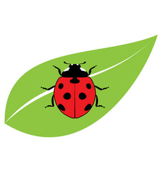 red ladybird on a green leaf vector image