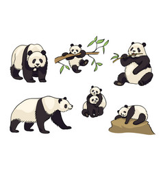 set of pandas in cartoon style vector image
