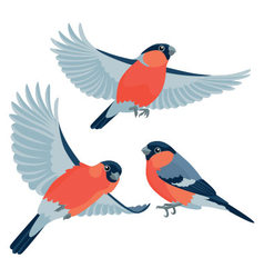 Bullfinches on white background vector image