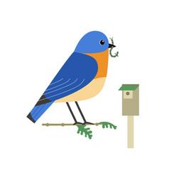 Eastern bluebird cute flat color icon vector