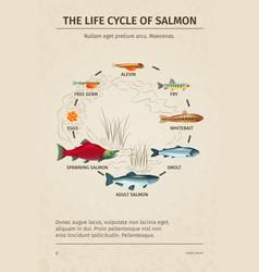Salmon life cycle poster vector