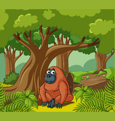 Orangutan lives in the forest vector