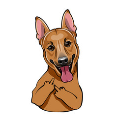 Brown cute dog with middle finger vector