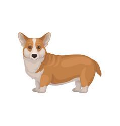 Detailed flat portrait of cute welsh corgi vector