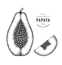 Hand drawn sketch style papaya organic fresh food vector