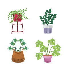 Indoor plants in pots landscaping at home decor vector