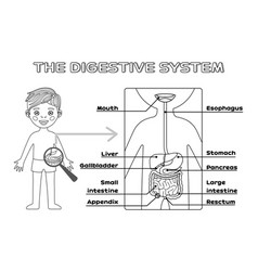 Isolated cartoon boy and digestive system vector