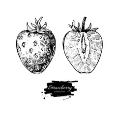Strawberry drawing set isolated hand drawn vector