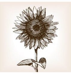 Sunflower hand drawn sketch style vector