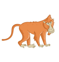 Baboon monkey isolated wild brown ape with tail vector
