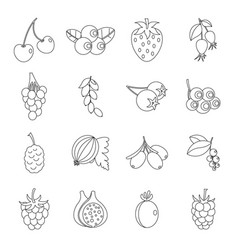 berries icons set outline style vector image