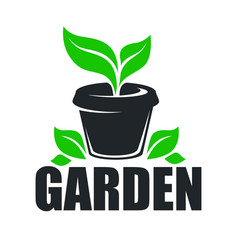 garden greenery plant growing in pot isolated icon vector image