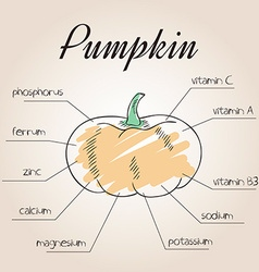 Nutrient list for pumpkin vector