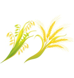 Wheat and oats ears vector