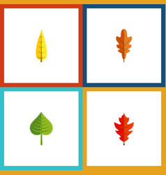 Flat icon leaf set of maple hickory linden and vector