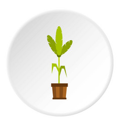 Palm in a wooden pot icon circle vector