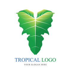 tropical plant symbol logo green elephant ear vector image