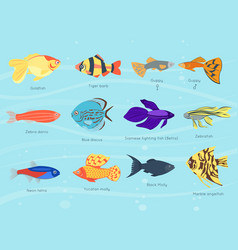 exotic tropical fish different colors underwater vector image vector image