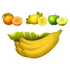 ripe fruits realistic juicy healthy vector image
