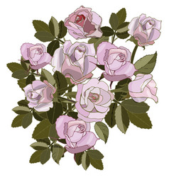 bouquet pink roses for card pattern vector image