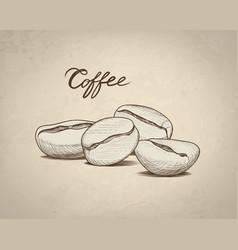 Coffee beans sketch drink coffee banner line art vector