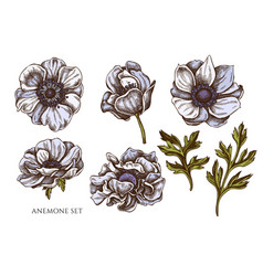collection hand drawn colored anemone vector image