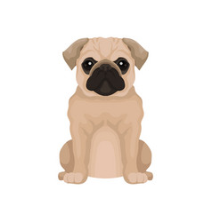 Flat icon of cute pug puppy small domestic vector