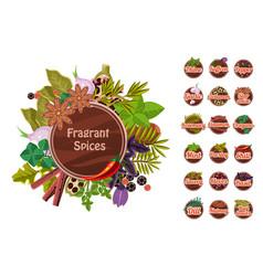 Fragrant spices set thyme saffron pepper vector