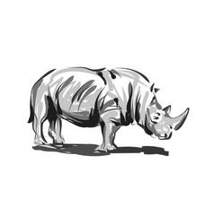 line sketch rhino vector image