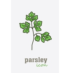 Parsley icon Vegetable green leaves vector