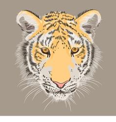 Serious amur tiger vector