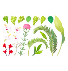 Tropical plant objects set vector