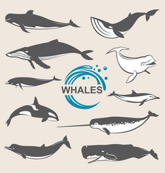 various whales set vector image