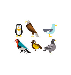 birds set penguin eagle gull pigeon vector image