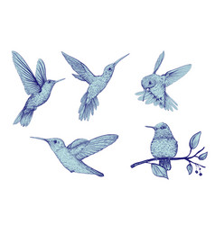 clipart of isolated birds colorful hand vector image