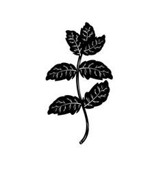 Contour peppermint plant ingredient to condiment vector