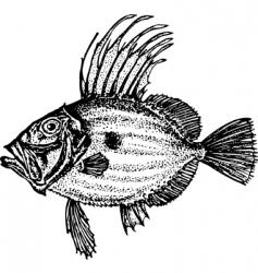 Fish zeiformes vector